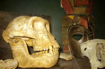 Skull and artifacts